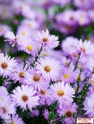 <b>尘埃开出的花不在春天</b>