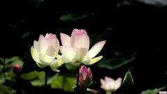 白花花的泡沫