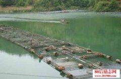 <b>山区网箱养鱼的几点关键技术</b>