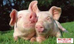 <b>农家快速养猪受益的几种方法</b>