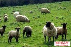 养殖科学:禽畜喂饲需要