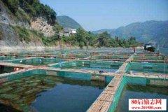 养鱼经验:用大草堆
