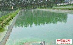 养鱼经验:鱼池翻塘处理
