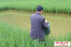 鱼——猪——草综合养鱼
