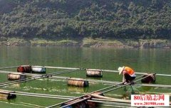网箱养鱼日常管理工作
