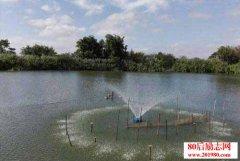 池塘养鱼技巧:鱼塘增氧
