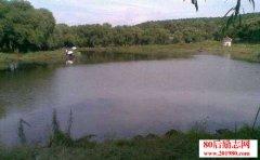 鱼池施用草木灰有哪