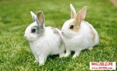 利用兔子粪便加工