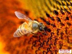 山区中蜂秋季管理方法